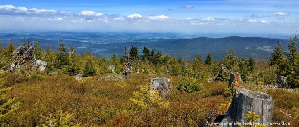 Zwercheck Osser Kammwanderung Aussichtspunkt auf Stausee