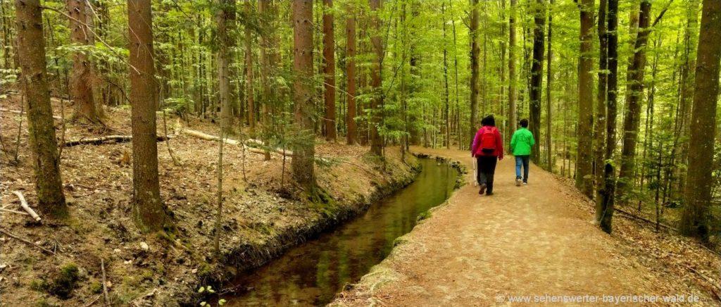 Urwald Erlebnisweg und Schwellsteig beim Zwieseler Waldhaus